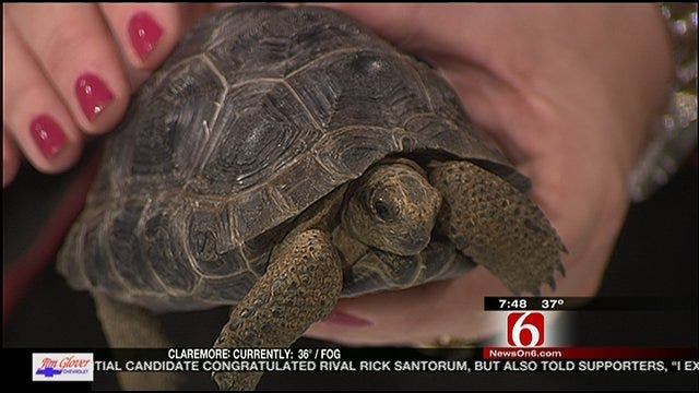 Wild Wednesday: Aldabra Tortoise