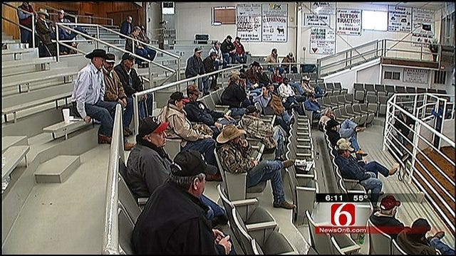 Oklahoma Sale Barns Setting Record Prices For Cattle