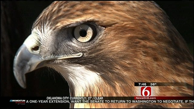 Wild Wednesday: Red Tailed Hawk