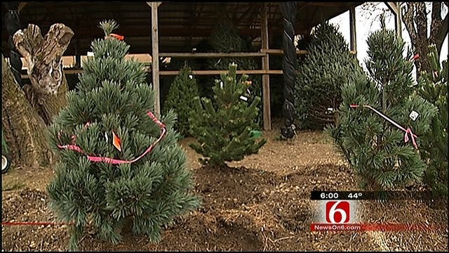 Wild Weather Made For Smaller Crop At Green Country Tree Farms
