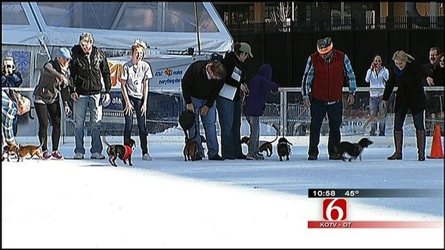 Tulsa Wiener Dogs Participate In Annual Race On Ice