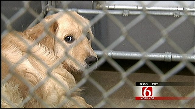 Rogers County Rescue Dogs Get Second Chance At Life