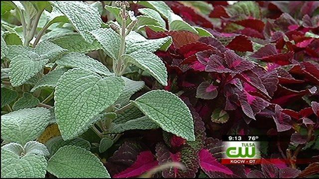 Vegetation Important Part Of Tulsa Zoo's Success