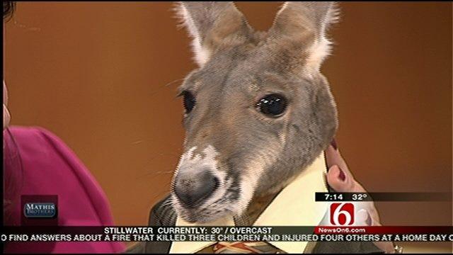 Irwin The Kangaroo Visits Six In The Morning