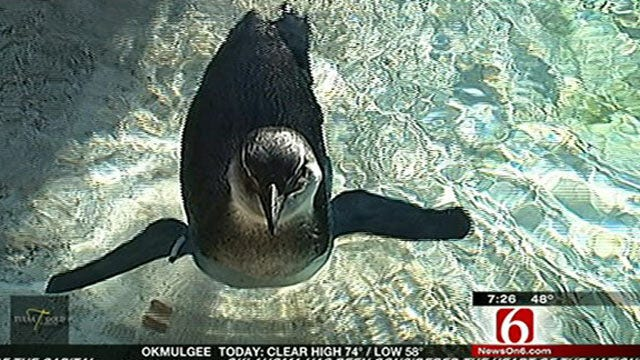Wild Wednesday Features Lenny The Penguin