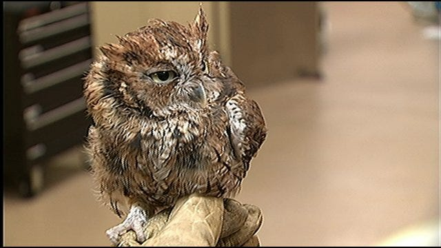 Wild Wednesday With Chicken Bone The Owl