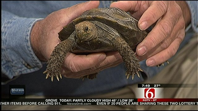 Wild Wednesday - Tortoise Visits Six In The Morning Set