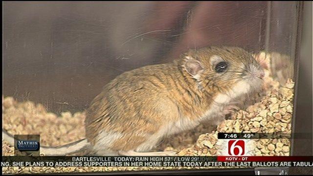 Kangaroo Rat Featured On This Week's Wild Wednesday