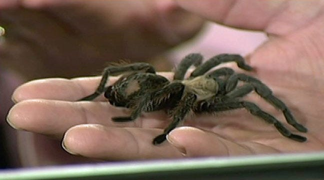 Creepy Crawlies Visit Six In The Morning For Hallowzooeen