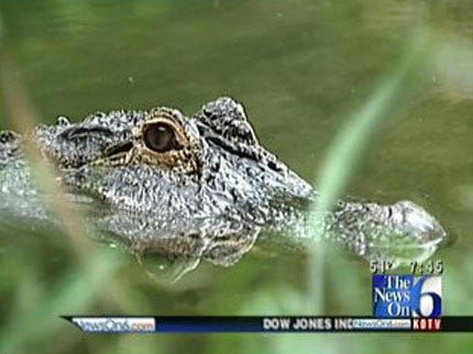 Wild Wednesday: Amazing Alligators