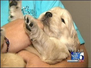 Tulsa Organization Looking For Families To Help Train Service Dogs