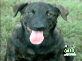 Reward Offered For Missing Oklahoma Service Dog