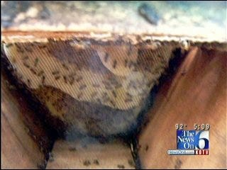 Tulsan Find Beekeeping Adventure in Uganda
