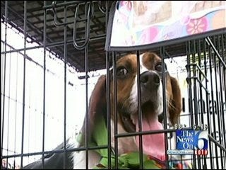 Radar the Weather Dog Promotes Pet Rescue at Woofstock