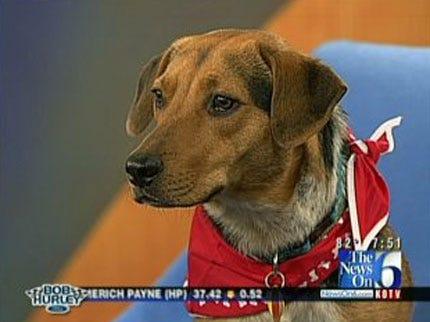 Meet Radar The Weather Dog At Woofstock Saturday