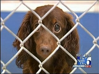 Tulsa Animal Shelter: There Is Legal Alternative To Dumping Pets