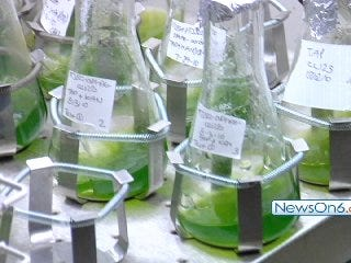 TU Research Suggests Nation's Next Big Fuel Source Could Be Algae