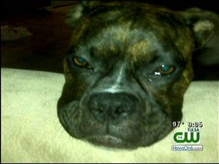 Catoosa Pet Owner Upset After Police Officer Shoots Dog