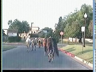 Video From The News On 6 As We Followed The Horses Across Tulsa
