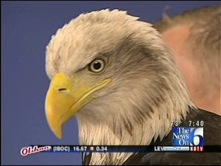 Bald Eagle Visits Six in the Morning