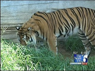 New Management Has New Plans For Tulsa Zoo