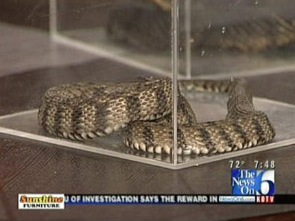 Wild Wednesday Takes A Look At Cottonmouth Snakes