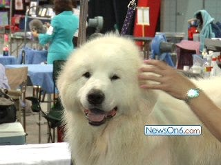Tulsa Roundup Dog Show Raises the 'Roof' at Expo Square