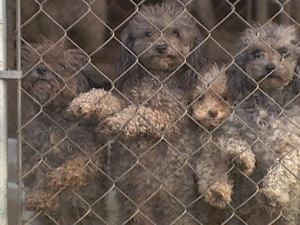 Governor Signs Puppy Mill Regulation Bill Into Law
