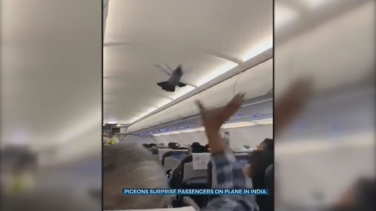 Pigeons Surprise Passengers, Fly In Airplane Aisle