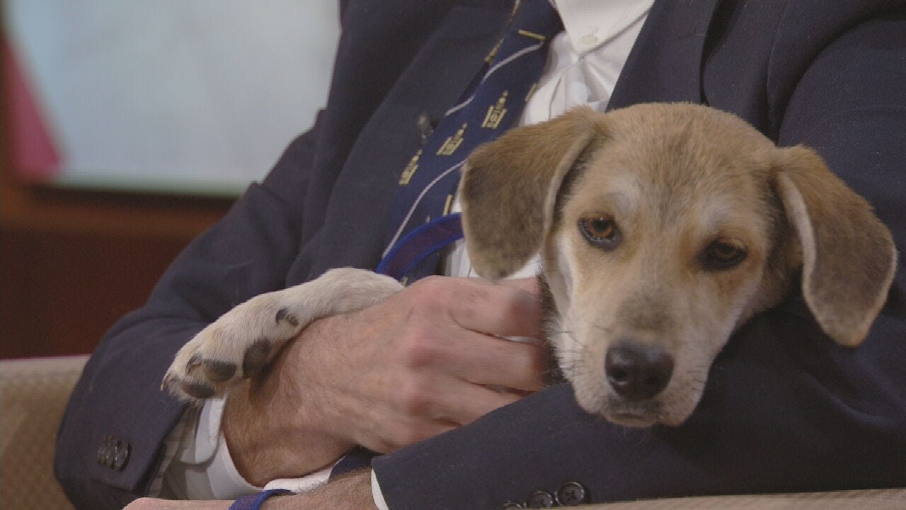 Pet Of The Week: Mary Jane