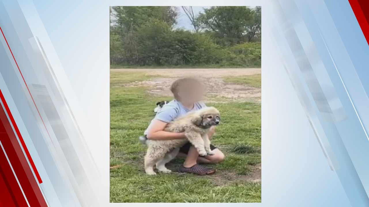 Police Searching For Suspect That Stole Puppy From Bristow Family