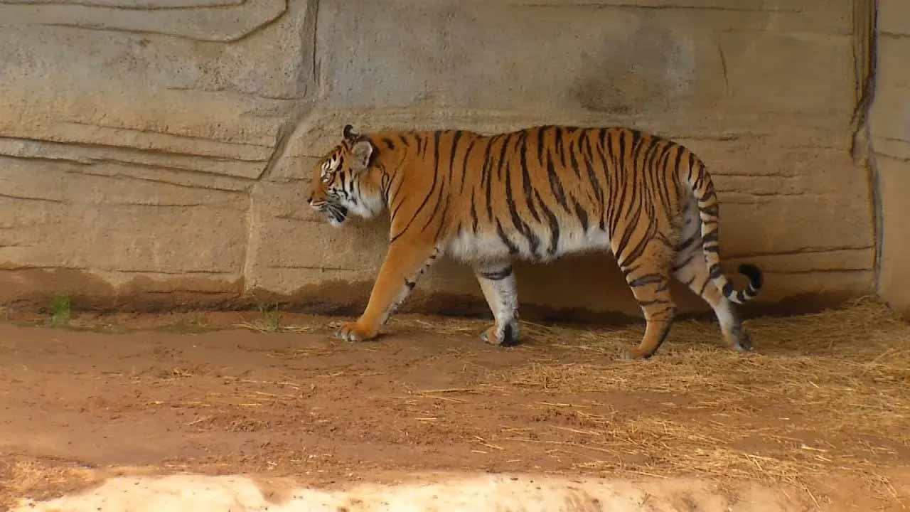 Tulsa Zoo Membership Price Drop