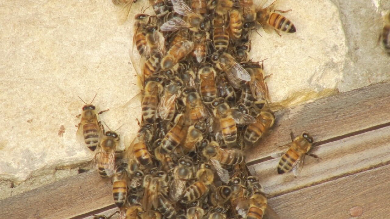John 3:16 Mission Helps Family Swarmed By Honeybees