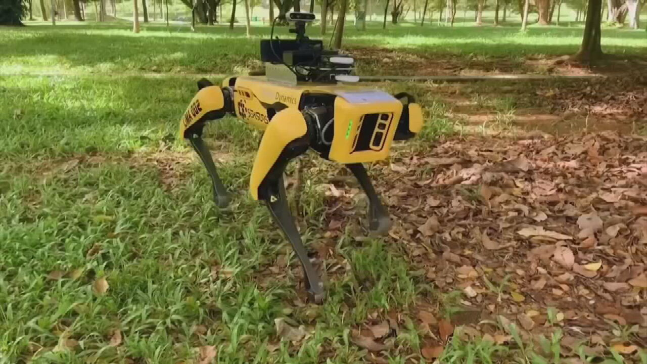 WATCH: Robotic Dog Fights COVID-19