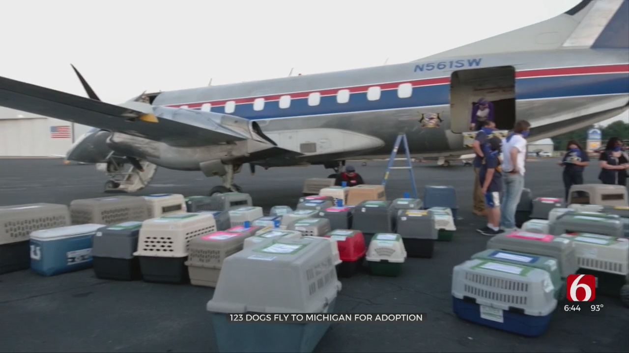 More Than 100 Tulsa Dogs Flown To Their Fur-Ever Homes