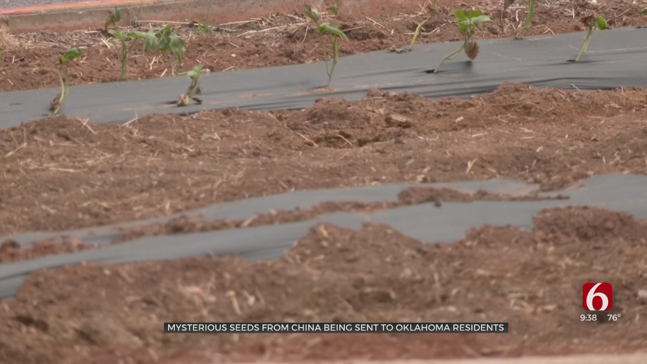 Oklahomans Receive Mysterious Seeds In Mail; Government Concerned