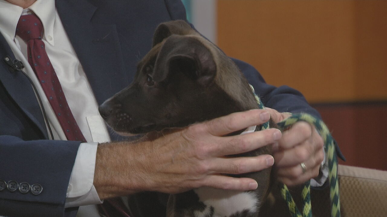 Pet Of The Week: Geo