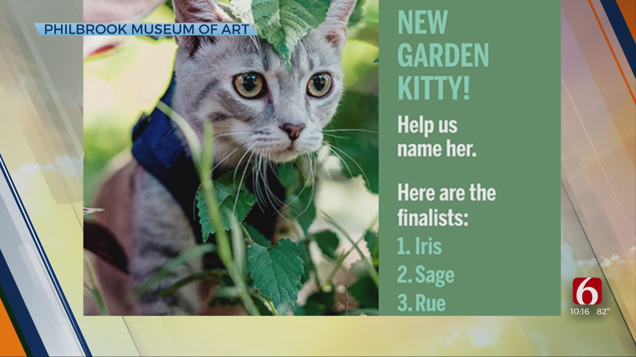 Philbrook Museum Seeks Suggestions For Name Of Newest Garden Cat