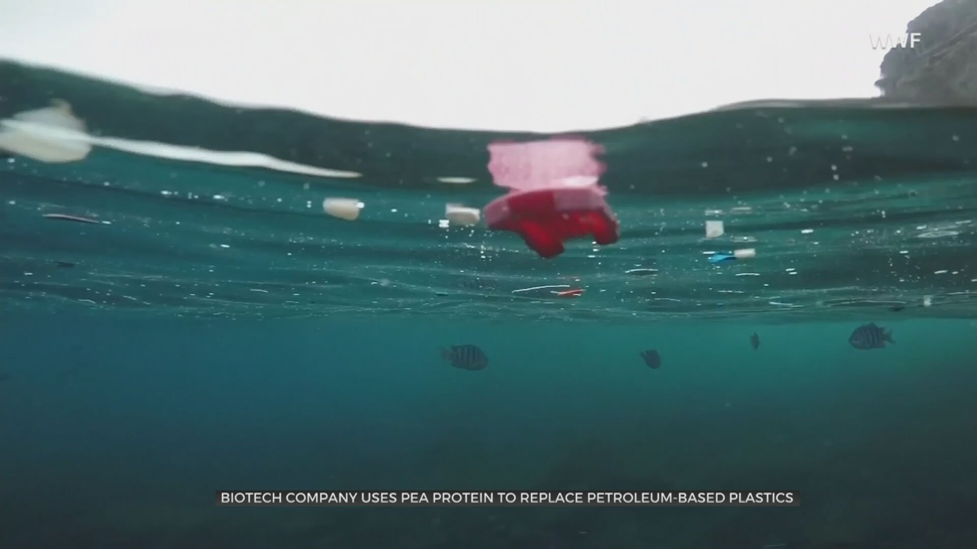 Biotech Company Uses Pea Protein To Create New Biodegradable Plastic