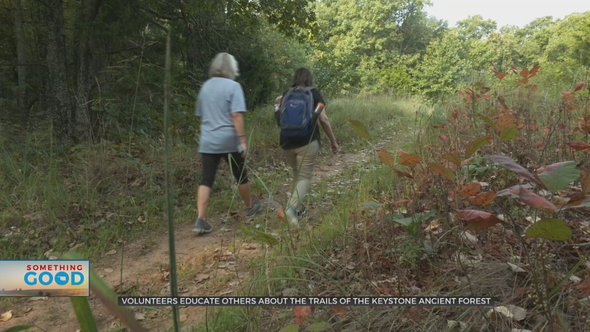 Volunteers At Ancient Forest Trails Help Visitors Step Off Beaten Path