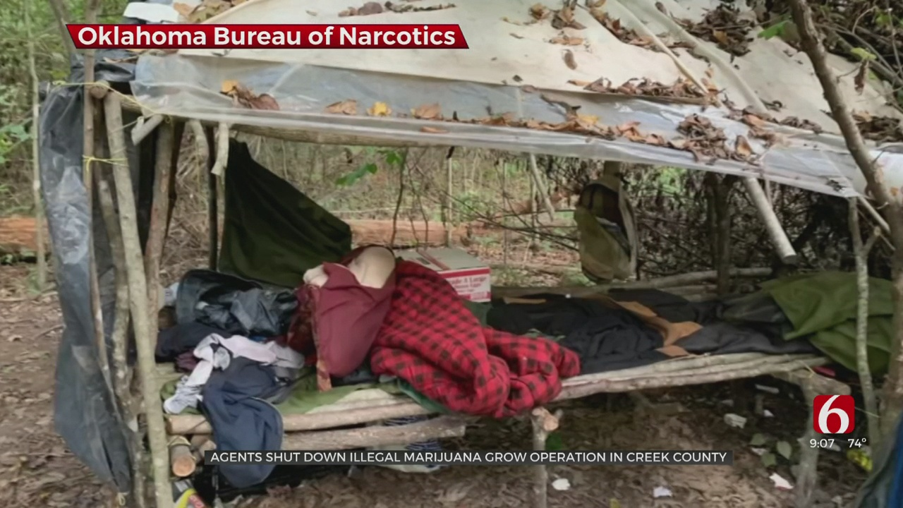 Agents Shut Down Illegal Marijuana Operation In Creek County