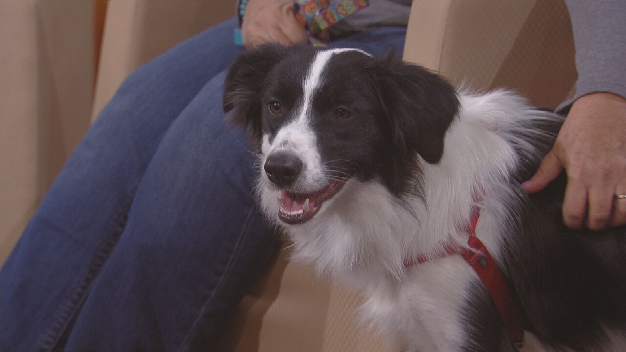 K-9 Manners Offers Tips For Pet Anxiety & Chewing