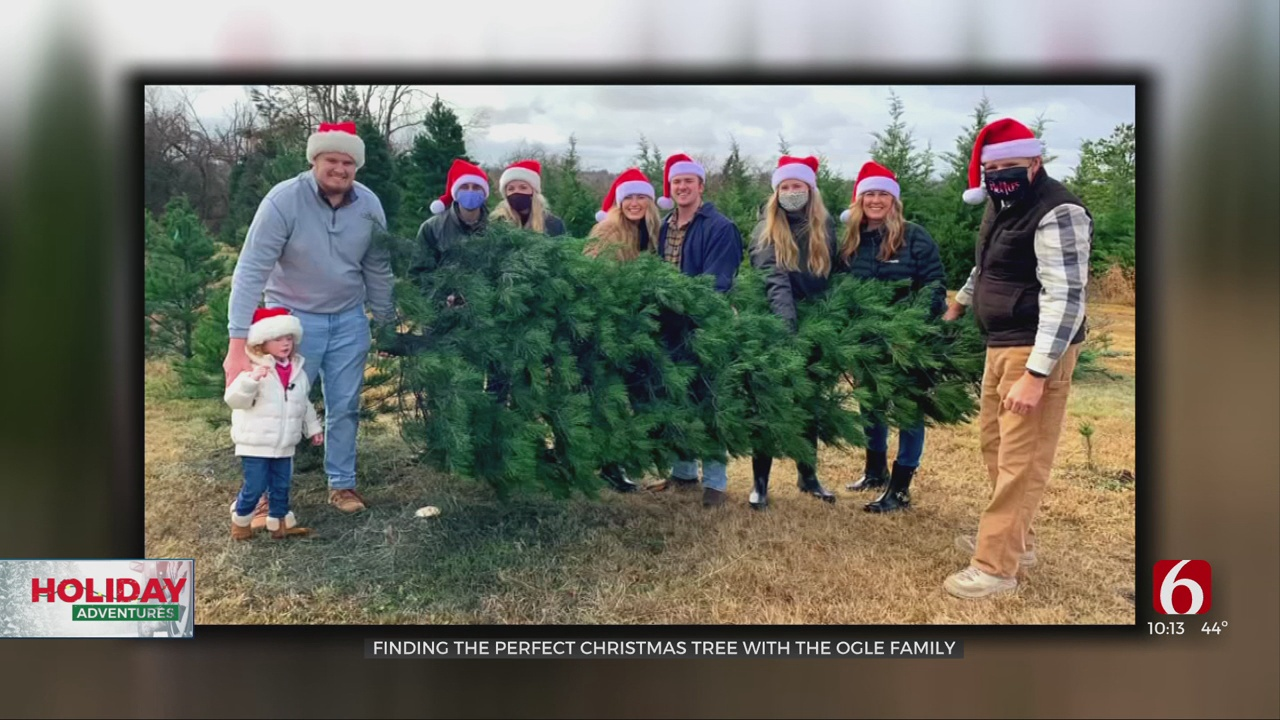 Finding The Perfect Christmas Tree Is A Family Affair