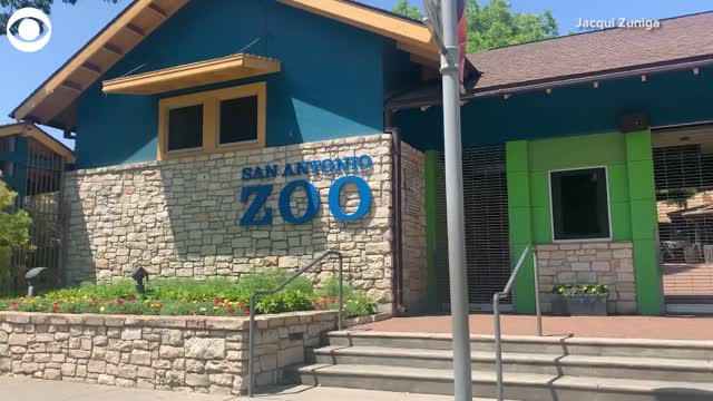 Drive-thru at San Antonio Zoo