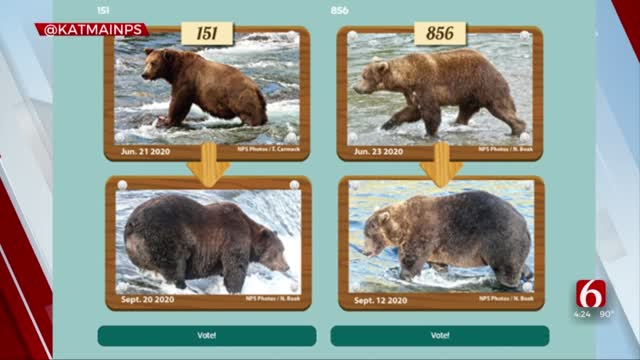How To Take Part In Fat Bear Week At Alaskan National Park