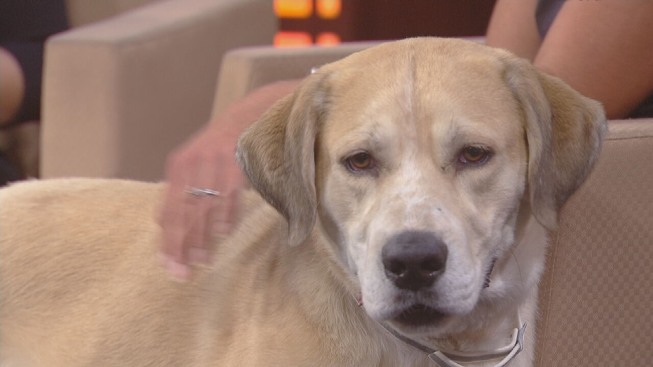 Pet Of The Week: Banner