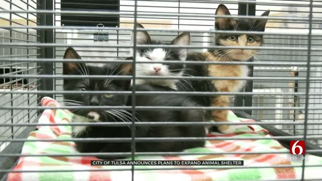 City Of Tulsa Announces Plans To Expand Animal Shelter