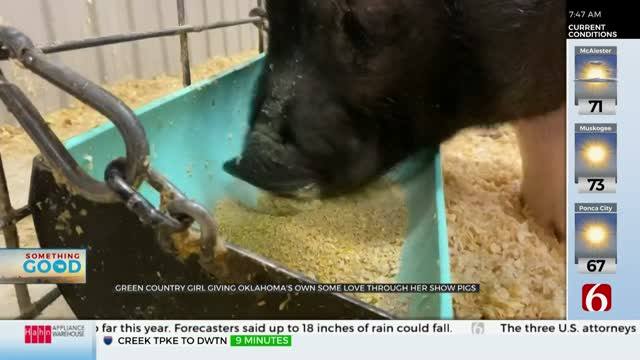 Green Country Girl Wins Top Prize With News On 6 Show Pigs