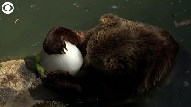 Watch: Zoo Animals In Rome Enjoy Frozen Snacks