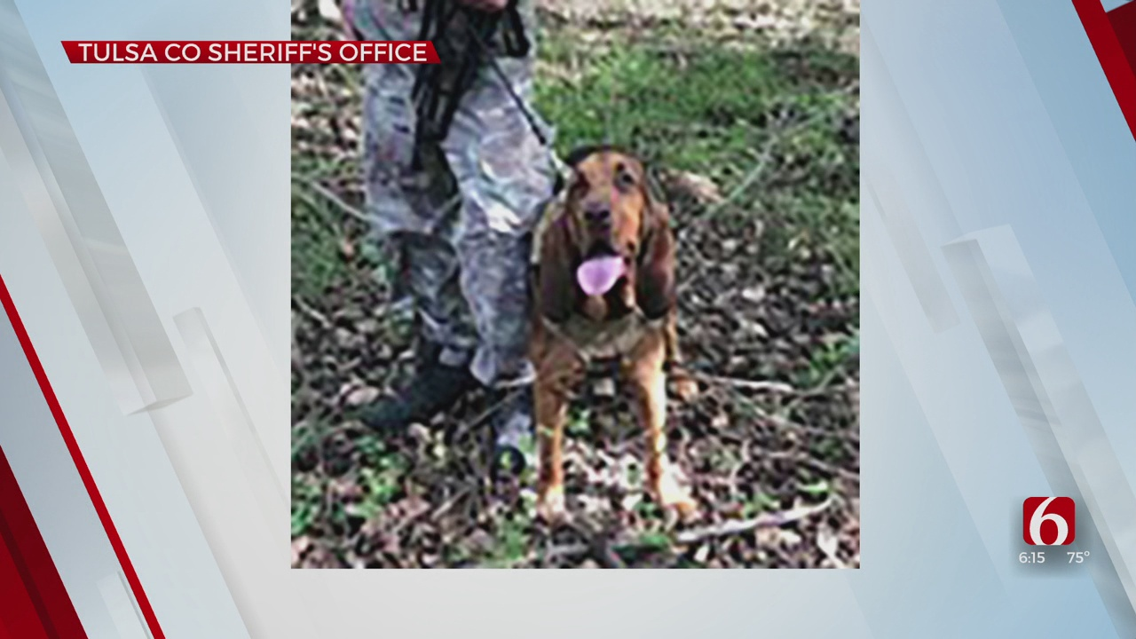 Tulsa County Sheriff's Office To Welcome New Tracking K-9
